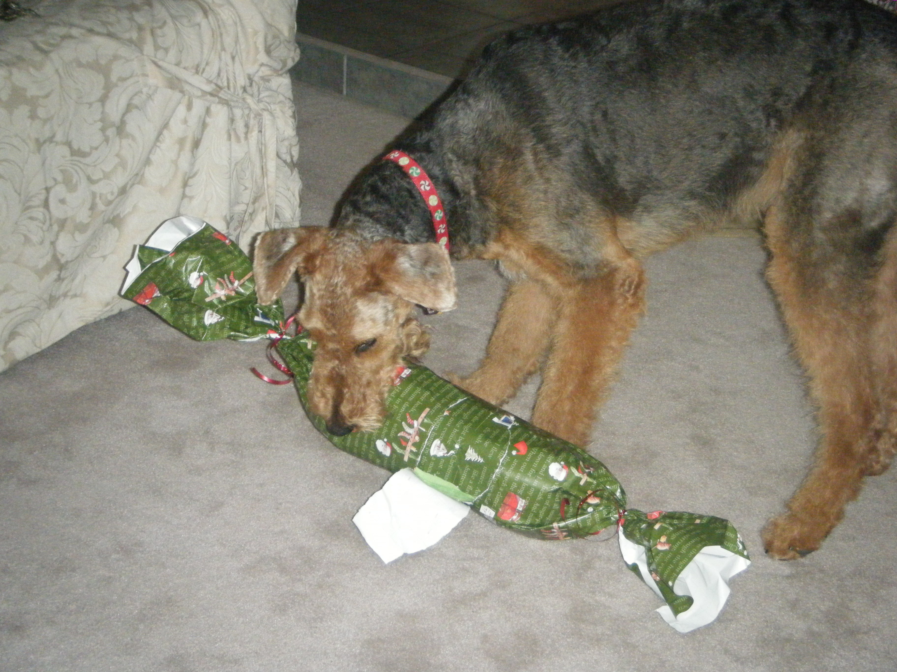 Lucy Opening a Present